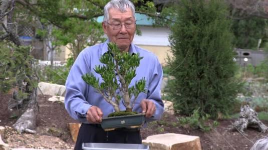 Intl. Bonsai Master Harold Sasaki