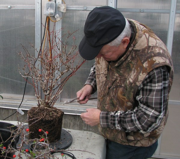 Bob working on Barberry