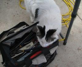"""DBG - Jinx """"Bad Kitty"""" wizzed in my bag!!!"""