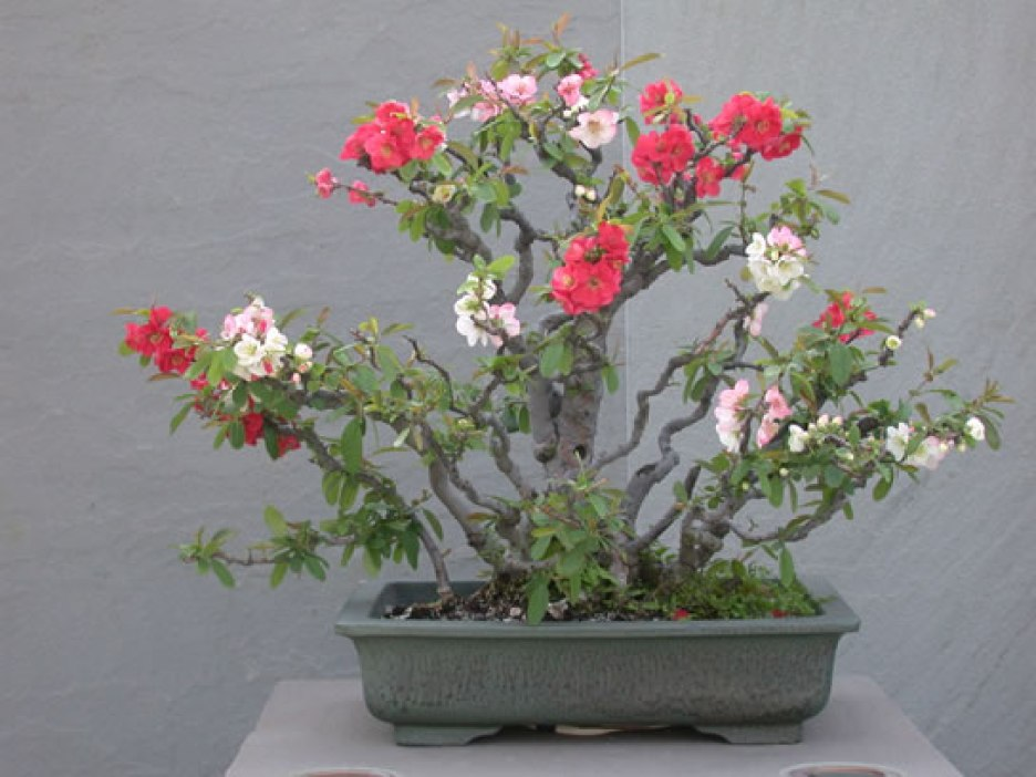 Courtesy of The National Bonsai Foundation