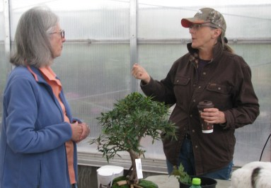 Mary and Terril talking Ficus