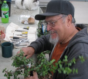 Lou working on yet another Elephant Bush