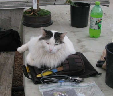 Jinx the cat guarding Larry's tools!!