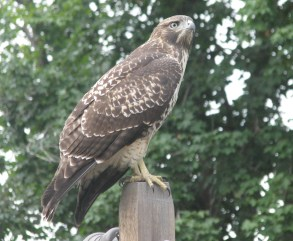 Hawk stopped in to see Bjorn's work