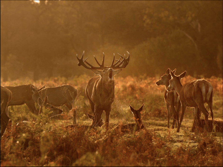 OUT OF THE RUT: 01 NOVEMBER 2014, THE END OF THE CROWN & FAKE EU HEGEMONY.