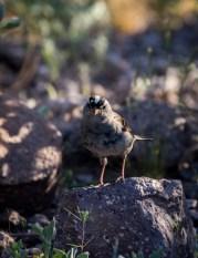 Arizona_Phoenix_Lost Dutchman State Park_6421
