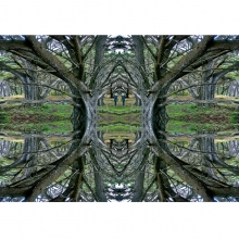 7 Double Mirrored Tree, Haunted