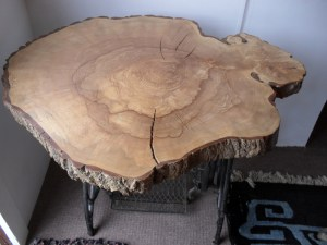 150 year old Ash tree slice showing the history of the tree