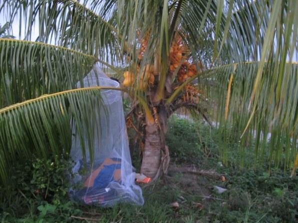 Ein Bett im Reisfeld, das ist immer frei. Und leider auch voller Mücken.