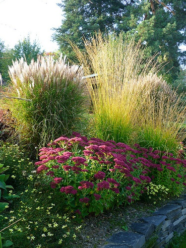 My garden diaries rooms for rent blog for Garden ideas with ornamental grasses