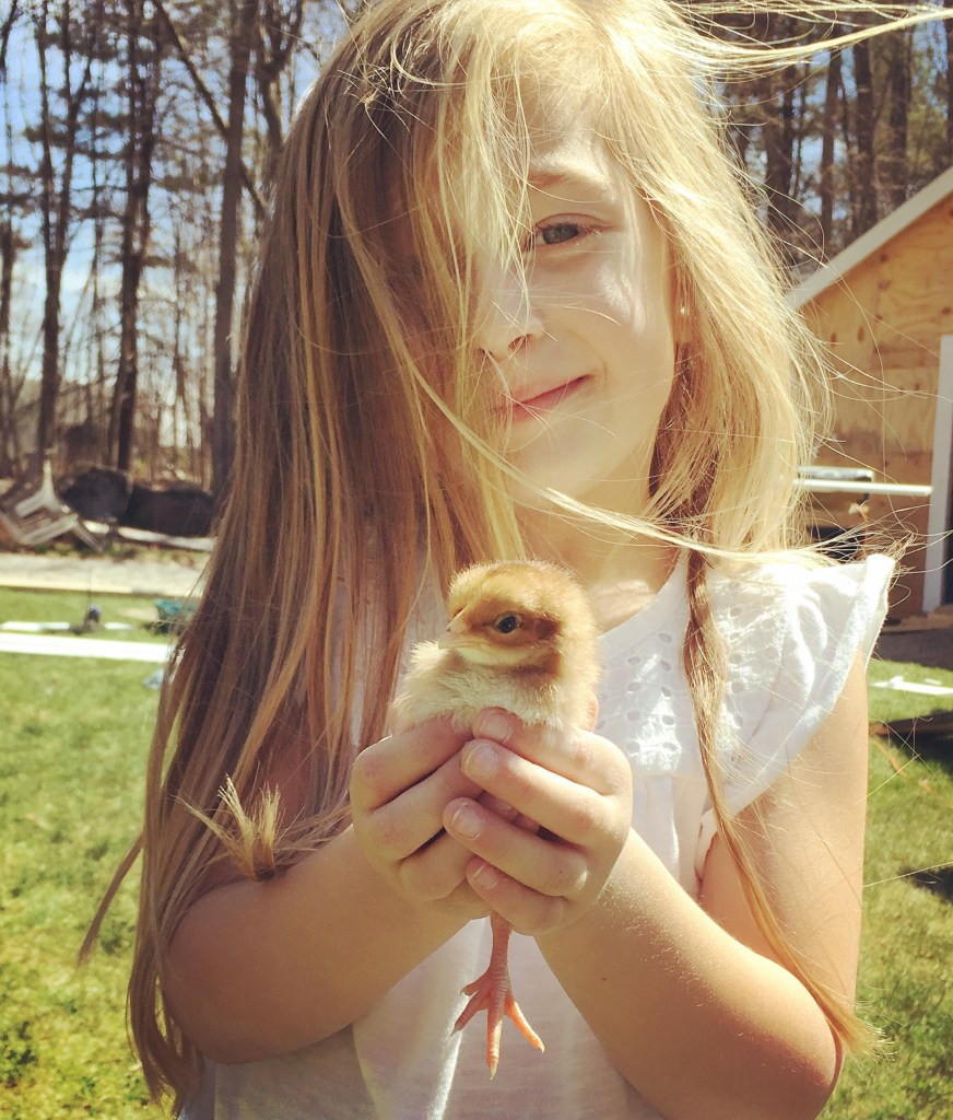 Baby Chickens | Rooms FOR Rent Blog