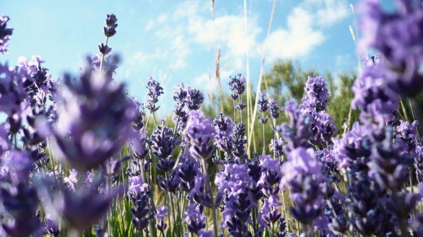 lavender-sky