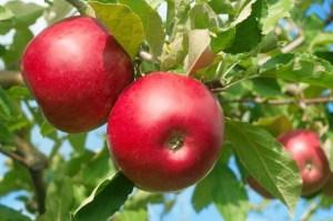 apple_8
