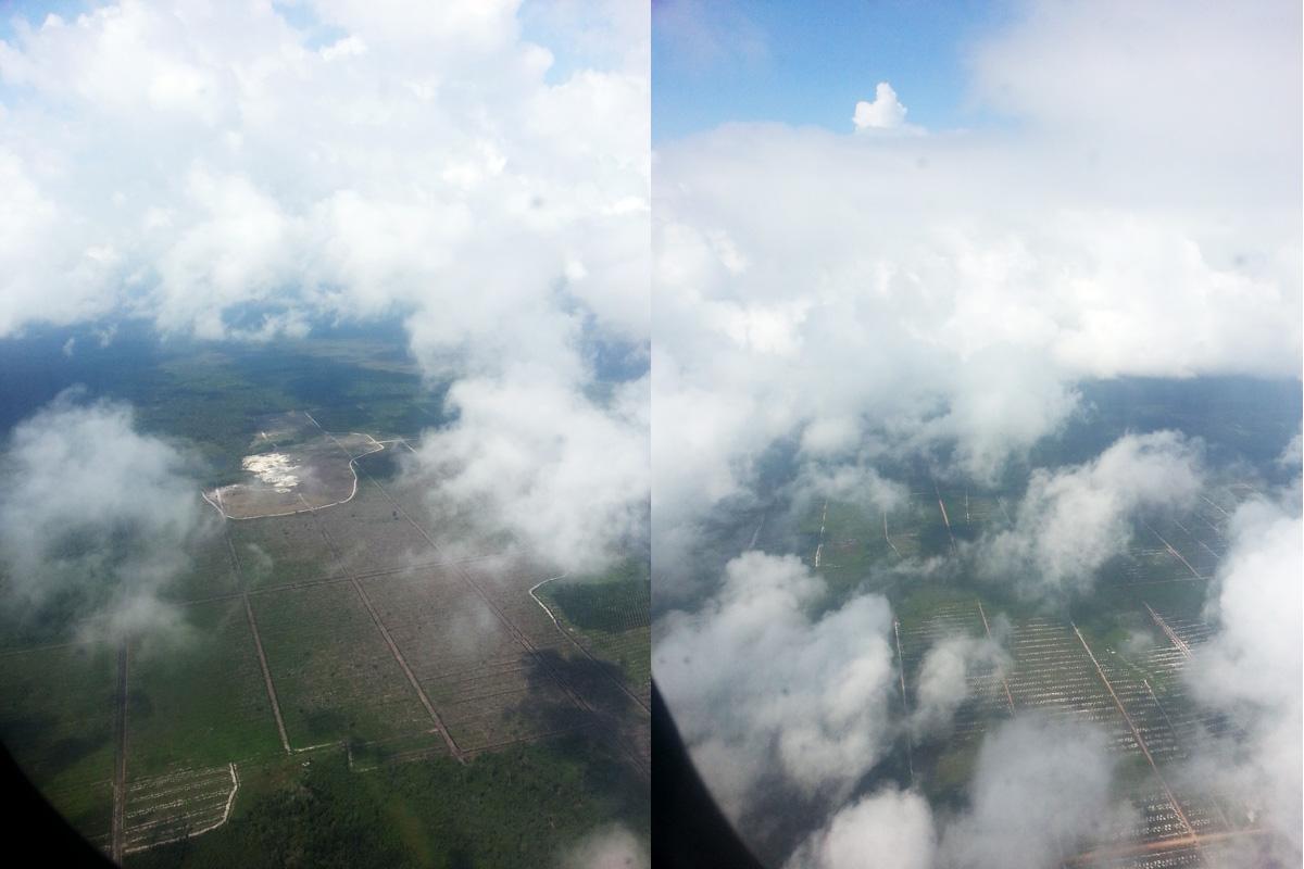 deforestation borneo voyageur écologiste