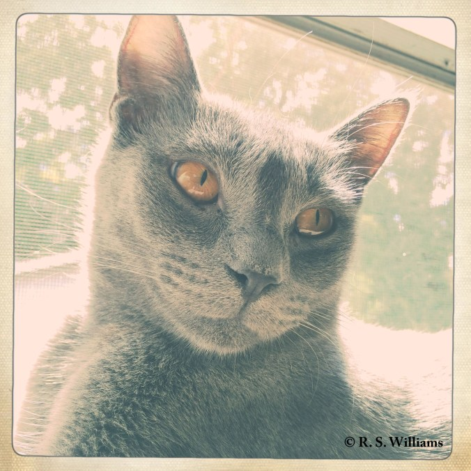 caturdaygray_copy_2016-08-15