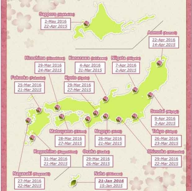 sakura-graph