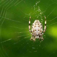 Spinnen-Expedition auf Zeche Nachtigall