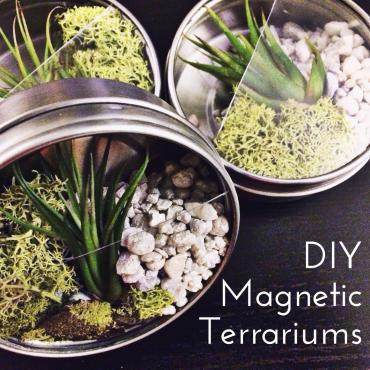 DiY mini terrariums