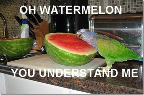watermelon understands me thumb Five Fun Friday Fings