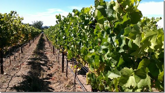 santa rosa vineyards 800x450 thumb Where to Stay and Eat in Santa Rosa