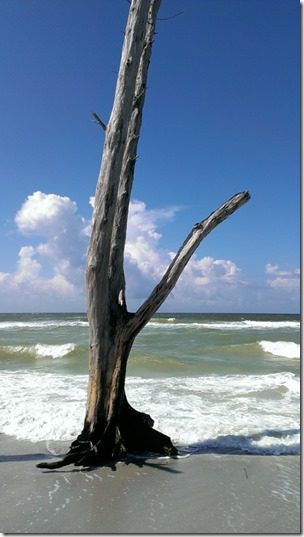 beautiful beach tree 450x800 thumb Florida Favorites on Friday