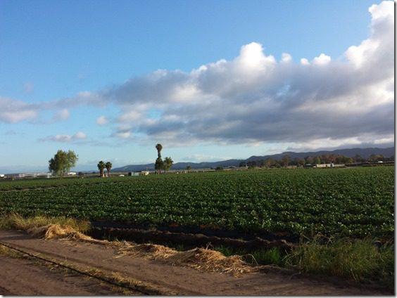 running around orange county long run marathon 800x600 thumb Training for Rock N Roll San Diego Marathon and Suja Juice