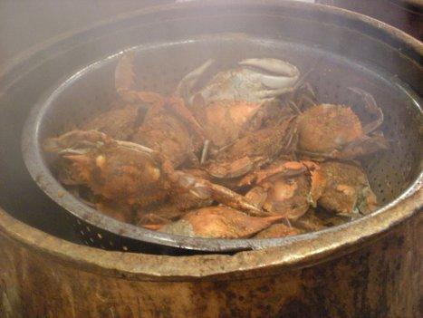dscn0826 My first crabs...