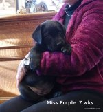 Miss Purple at 7 weeks