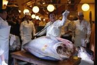 million_dollar_tuna