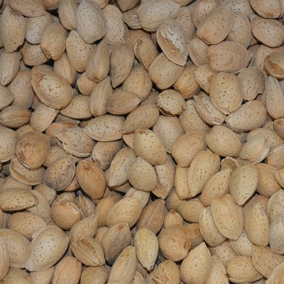 Almonds Shell