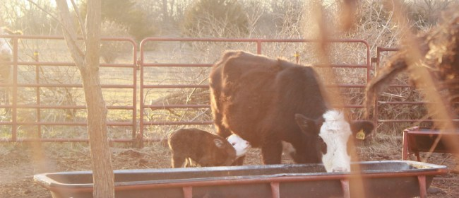On The Farm: Twins!