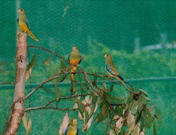 released into big aviary