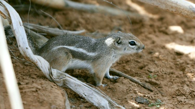 Killer Critters: Here's How to Avoid the Plague When Camping