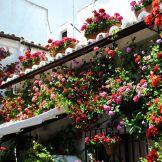 Cordoba_FlowersRoof
