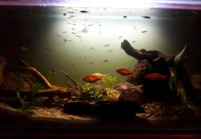 Michael Šíp: Jak jsem zakládal studenovodní akvárium