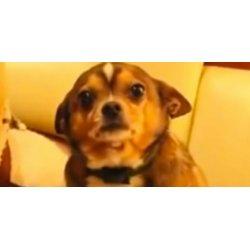 Astounding Sad Music Makes Guilty Dog More Guilty Huffpost Denver Guilty Dog Instagram Denver Guilty Dog 2017