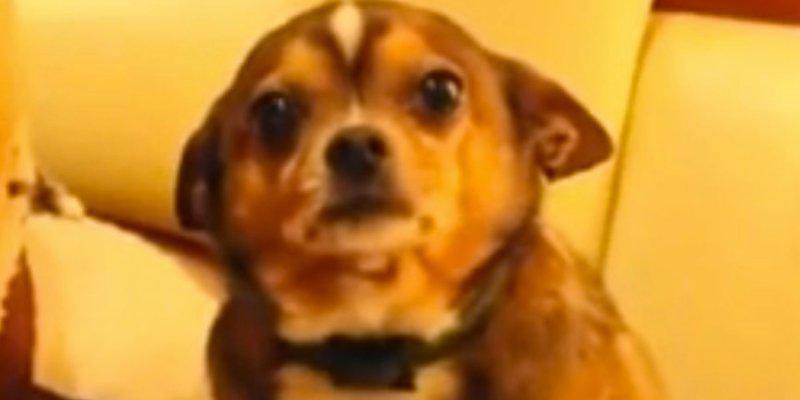 Large Of Denver The Guilty Dog