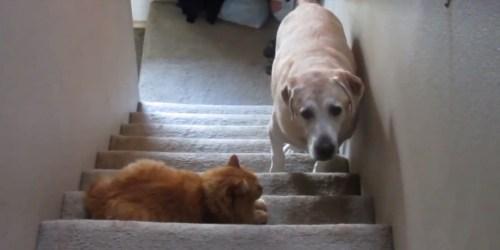 Medium Of Dog Wants A Kitty