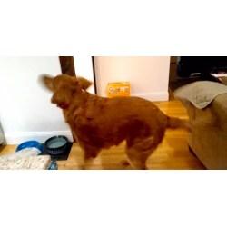 Small Crop Of Dog Dancing Gif