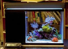 & Saltwater on Pinterest | Reef Aquarium, Saltwater Aquarium
