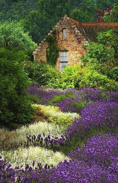 Cottage with Lavende