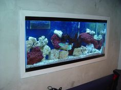 Aquarium on Pinterest | 75 Gallon Aquarium, Aquarium and Aquarium Fish