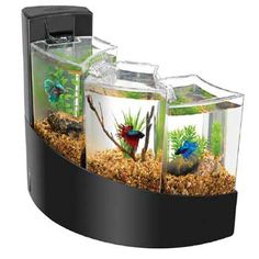 Betta Tank on Pinterest | Betta, Betta Fish and Aquascaping