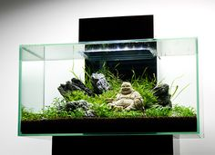 Edge Aquarium on Pinterest   Aquarium, Nano Aquarium and Fish Tanks