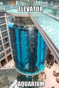 cool fish tanks on Pinterest | Fish Tanks, Aquarium and Aquarium Fish