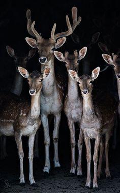 Poster do filme Uma História de Paixão Animal