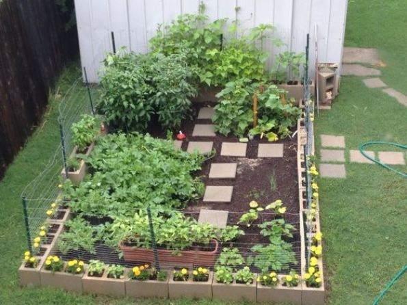 This beginner is off to a great start with her cinder block garden --> http://www.hgtvgardens.com/ask-and-share/maintenance-discussions/i-am-a-beginner-and-started-a-cinder-block-garden-im-at-2-month-mark-any-suggestions-0000013e-dd47-d409-a93e-dfe763670000?soc=pinterest: