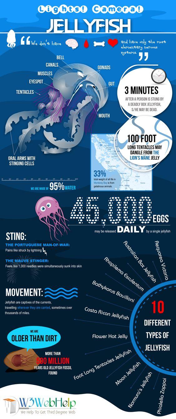 Jellyfish infographic chart