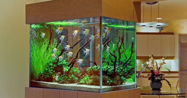 200 gallon tall aquarium | 3 | Pinterest | Aquarium
