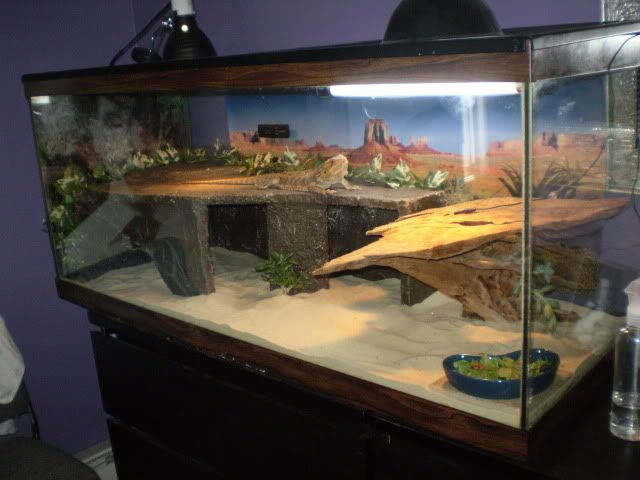75 gallon? | My style | Pinterest | Bearded Dragon, Dragons and Tanks